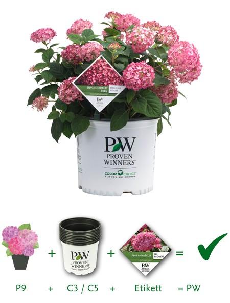 pw_web