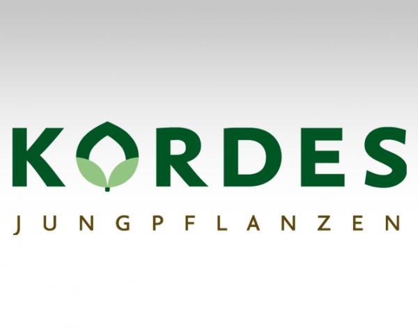 kordes-jungpflanzen-logo-bg